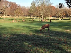 """Wollaton Hall & Deer Park • <a style=""""font-size:0.8em;"""" href=""""http://www.flickr.com/photos/81195048@N05/8209885067/"""" target=""""_blank"""">View on Flickr</a>"""
