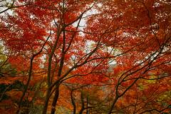 Look up (taroyan_155) Tags: autumn sigma dp1s