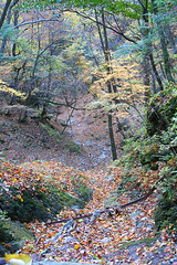 IMG_9875 (youkaine) Tags: november autumn red orange mountain yellow japan forest river waterfall hiking autumncolors foliage 日本 紅葉 秋 山 yamanashi 11月 川 ハイキング 山梨 nishizawakeikoku 葉っぱ 山梨県
