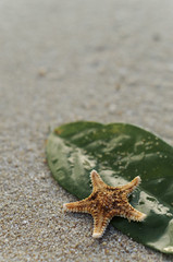 Star Surfer (drivingback) Tags: beautiful forsale starfish prints smca50mmf17 eastcoastbeach justpentax travellingniftyfifty pentaxk30 beautifulprintsforsale