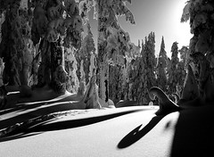 Finally (Christopher J. Morley) Tags: park trees bw sunlight white snow canada black nature shadows bc curves columbia british garibaldi provincial snowcoveredtrees alw achromatic oneofmyfavouritethings