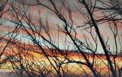1 (3no0od Ebrahim) Tags: blue trees red sky orange cloud sundown twigs anood غروب ابراهيم ebrahim سماء غيوم شجر برتقالي ازرق anoud احمر عنود إبراهيم اغصان الابراهيم 3no0od