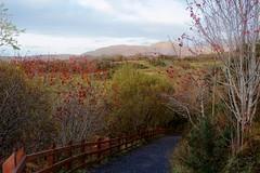 IMG_5131 (cmryan07) Tags: ireland vacation nationalpark connemara countygalway connemaranationalpark