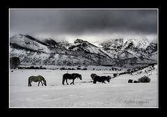 El regreso (Rubenuco) Tags: caballos 350d nieve ngc len montaas casares legiophotos