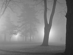 Radiša Živković - Hazy II (Radisa Zivkovic) Tags: park city trees blackandwhite mist fog night dark town europe walks darkness serbia olympus belgrade beograd luminaires srbija kalemegdan mysticalatmosphere