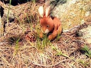 Photo - Rabbit
