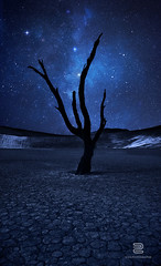"""Immortel"" (S.D.G Photographie) Tags: longexposure nature night photoshop stars landscape southafrica nightscape desert creative creation national montage 7d paysage sesriem namibia toiles milkyway sdg sossusvlei deadvlei namibie startrail voielacte poselongue fildtoiles"