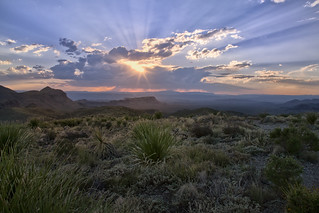 Chihuahuan Desert Beauty