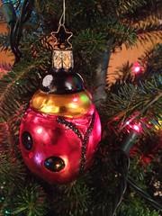 Ladybug ornament (shireye) Tags: christmas lights decoration christmastree ornament years 37 tradition ladybugornament iphone4s