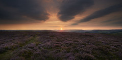Owler Tor Moor (IanMcConnachie) Tags: owlertor peakdistrict peakdistrictnationalpark sunset heather millstoneedge derbyshire england moor clouds landscapepanorama landscapephotography heatherinbloom purpleheather digitalphotography canon1740f4l canon leefilter gitzo