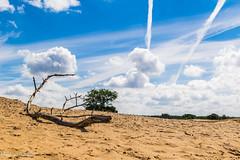 Kootwijkerzand 3 (M van Oosterhout) Tags: kootwijkerzand kootwijk veluwe holland nederland netherlands duch desert woestijn zand landschap landscape nature natuur wolken clouds