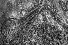 IMG_4009 (cescasals) Tags: burned forestfire blackandwhite monocrome blancoynegro photography cescasals textures