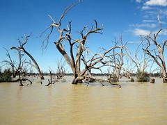2016-08-17  - Pamamaroo Lake, Western NSW - 2 (Ian Granland) Tags: menindee pamamaroolake