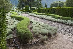 _DSC7563 (Robby68) Tags: vert marqueyssac jardin dordogne nature france soir suspendu