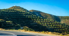 Olive plantations. Crete. (Marie Villars) Tags: greece crete olive trees hills