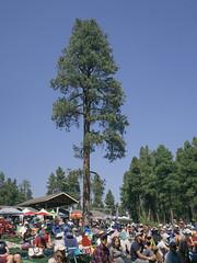 1609 Pickin in the Pines13 (nooccar) Tags: 1609 nooccar devonchristopheradams pickininthepines sept2016 september bluegrass bluegrassfestival contactmeforusage devoncadams dontstealart photobydevonchristopheradams