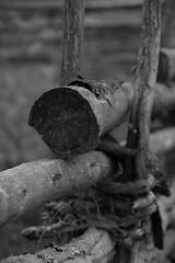 IMG_7368 (2) (karlsson_mari) Tags: grdesgrd smland blackandwhite