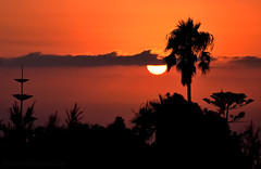 September sunset (Beatriz-c) Tags: sunset atardecer orange naranja silueta silhouette naturaleza nature sky cielo landscape paisaje nubes cloud clouds sun sol light luz tenerife canary islands islas canarias backlight contraluz palmtree palmera