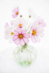 Lensbaby cosmos (photoart33) Tags: flowers stilllife cosmos lensbaby serene pink white delicate