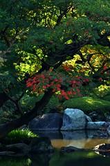 DSC_0424 (tanny ♪) Tags: city autumn fall japan tokyo october furukawateien