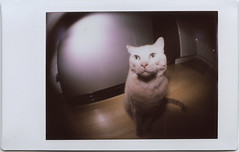 HAPPY CATURDAY! (abdukted1456) Tags: camera cat toy polaroid lomo lomography kitty mini fisheye plastic diana f 300 dianaf instax instantfilm instantback