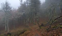Cold in the forest (elosoenpersona) Tags: parque autumn mist cold misty del de lluvia asturias sierra otoo fuentes niebla frio cordillera reserva cangas narcea cantabrica degaa elosoenpersona