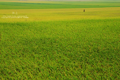 (nodie26) Tags: sky color field tour rice paddy farm taiwan