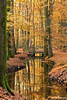 Sunday (Astrid Photography.) Tags: wood bridge autumn trees reflection nature water leaves brooke autumncolors veluwe autumnlight hierdensebeek astridphotography ultimateshot dedoka laaglandbeek