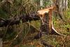 Snapped (wmliu) Tags: new storm tree us sandy hurricane nj jersey tropical wmliu