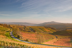 jme-05186 (Julian Elliott Photography) Tags: morning autumn light france color colour vineyard vines colorful vine vineyards colourful sancerre autumnal