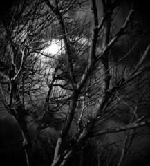 frammentiframmenti_DSC8252004020 (Antonio Sini) Tags: blackandwhite white black animals night dream story nightmare bianco nero biancoenero frammenti ofportalsandparallelworlds
