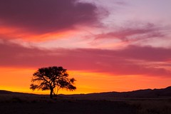 Namib Desert (Kuba Abramowicz) Tags: africa park travel sunset red sky cloud sun color colour tree colors yellow clouds sand colours fuji view desert cloudy magic national finepix vista afrika fujifilm moment namibia kuba namib twillight afryka namibnaukluft abramowicz hs30 lpsky hs30exr lpsky2