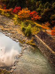 PhoTones Works #2147 (TAKUMA KIMURA) Tags: autumn tree nature leaves japan river maple scenery scene      autumnal  omd kimura      takuma   em5  photones
