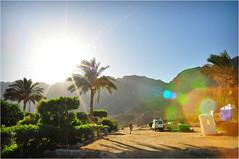 DSC_2237_dhb (Maksymilian Majoch) Tags: sun tree nature nikon dream graphicphoto obliquemind obliquamente