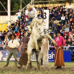 El tordillo y el cambá... (Eduardo Amorim) Tags: horses horse southamerica caballo uruguay cheval caballos cavalos prado montevideo pferde cavalli cavallo cavalo gauchos pferd hest hevonen chevaux gaucho 馬 américadosul montevidéu häst uruguai gaúcho 말 amériquedusud лошадь gaúchos 马 sudamérica suramérica américadelsur סוס südamerika jineteada حصان άλογο americadelsud gineteada ม้า americameridionale semanacriolla semanacriolladelprado eduardoamorim semanacriolladelprado2011 ঘোড়া