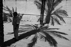 Chi vede La Verit in Ombra (bebo82) Tags: shadow blackandwhite bw river person persona pentax fiume ombra palm palma biancoenero giordano israele fernandopessoa pentaxk20d pentaxk20