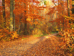 Sunny Afternoon in the Fall Forest (Batikart) Tags: park autumn light people orange plants brown sunlight plant man black color colour tree green fall nature leaves silhouette yellow forest canon germany way season walking landscape geotagged ou