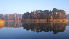 Autumn landscape (radimersky) Tags: morning autumn trees panorama mist lake reflection fall wet water lens landscape island lumix mirror haze europa europe colours gimp poland polska panasonic relection pancake woda 43 poranek fogg panorma ostrov jesie mga kolory jezioro 14mm gf1 drzewa krajobraz wyspa turawa jesieni turawskie mglisty rednie odbice niwki dmcgf1