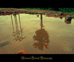 illusion (Animesh2000) Tags: blue light sky india reflection tree art home nature water beautiful leaves rural photography artistic illusion photograph animesh debnath