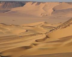 Egypt - Gilf Kebir (ursulazrich) Tags: sahara sand desert dunes egypt desierto gypten egitto egypte wste dnen westerndesert gilfkebir grossesandsee