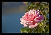 IMG_2455 (Churruk) Tags: flores azul agua rosa sierra desenfoque cádiz zaharadelasierra flickrstruereflectionlevel1
