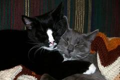 Orca and Pippin (gtjkb) Tags: friends cats love cat hugging hug kitten friendship kittens cuddle cuddling