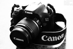 My First Camera: The Canon EOS Rebel T2i