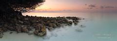 landscape panorama of the sunset on the Maldives (czdistagon.com) Tags: maldives panorama hyperfocal lee cz contax distagon 3514 fp distagont1435 czdistagon czdistagoncom carlzzeiss zeiss explorefrontpage explore front page landscape dawn wild nature nobody mangrove boulder vista wave pano bush sea vacation beam ocean tranquil exotic beautiful silhouette beach sun shine stone natural travel palm sunset tree wide calm tropical orange vivid morning sand dusk sunrise rock ray red violet matveevaleksandr aleksandrmatveev