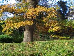 Clad in Autumn Finery (Evergreen2005) Tags: camera digital zoom kodak z740