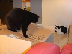 I high - you low (Ottmar H.) Tags: cat chat gato katze macska  kater  tomcat