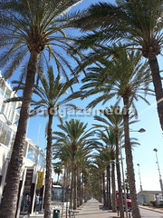 20151107_132753 (coldgazemedia) Tags: photobank stockphoto bluesky blue outdoor mallocra majorca spain espaa spainishisland palmademallorca palma promenade esplanade touristic balearicislands