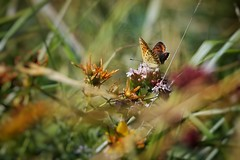 Colorful (Caro & Co) Tags: colorful butterfly flower sunset sunlight sunrise sunny natureperfection