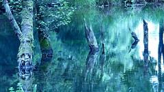 Le Passeur du marais (clairetresse) Tags: marais rivire sousbois faramans nord isre france