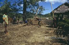 Lombok, Sassak Village, hard work (blauepics) Tags: indonesien indonesia indonesian indonesische lombok island insel building gebude sassak village dorf children kinder work arbeit rural lndlich agriculture landwirtschaft hart hard